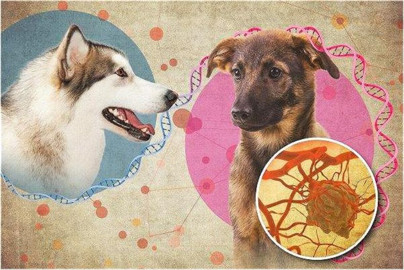 6000年前一隻狗的癌症,如何在今天席捲全球?