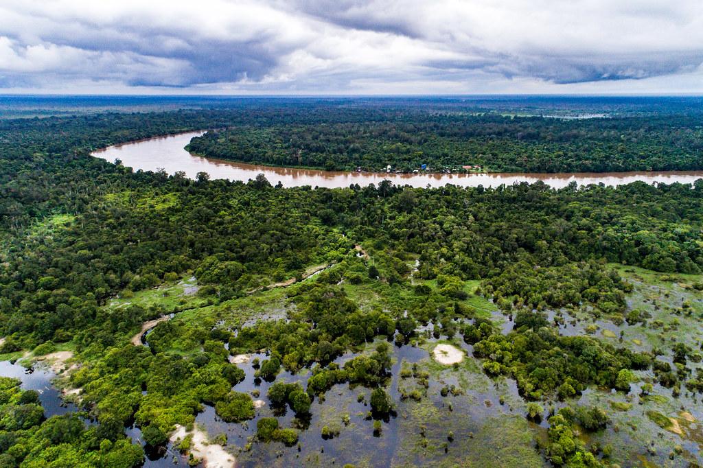 歐盟推出保護全球森林的新行動綱領_如何寫文案